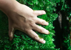 Human hand over moss Stock Images