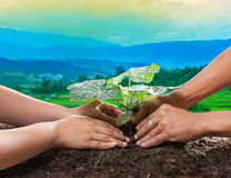 Human hand planting young plant together on dirt soil against be. Autiful sun light in plantation field use for natural conceptual and save nature to future Stock Photography