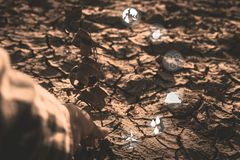 Human hand protect dry plant with icon on crack ground outdoor on the baking hot day. Drought and environmental problems royalty free stock photos