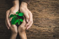 Human hand protecting the little plant.Concept earth day environ royalty free stock photo