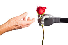 Human hand receiving rose from artificial hand royalty free stock photos