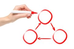 Human hand red marker of presenter drawing cycling process in three phases. On white background isolation stock image