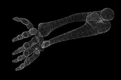 Human  hand skeleton Royalty Free Stock Image