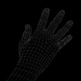 Human hand. Wire frame render Stock Image