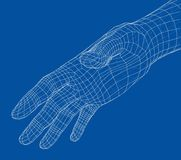 Human hand wire-frame. Vector. Illustration rendering of 3d Stock Photos