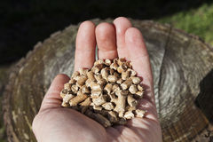 Human hand and wood pellet next to a trunk. Stock Image
