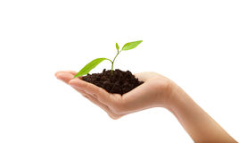 Human hand and young plant Stock Image