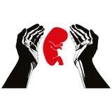Human hands with fetus. Human hands with fetus vector symbol Royalty Free Stock Photography