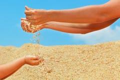 Human hands with grains crop Stock Photos