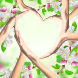 Human hands in heart shape over bright spring blossom Stock Image