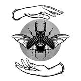 Human hands hold a horned bug. Circle of the moon. Esoteric symbol. Vector illustration isolated on a white background Stock Photography
