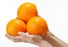 Human hands holding appetizing oranges Royalty Free Stock Photos