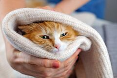 Human hands holding a cat. Tender love and friendship between human and animal. Adopting homeless animals and care