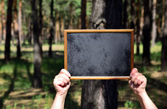 Human hands holding an empty wooden frame with a black backgroun. D on the background of the forest, a clear sunny day Stock Photos