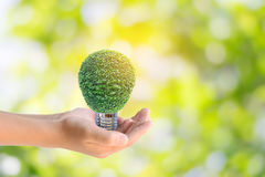 Human hands holding the energy saving lamp of tree Stock Photography