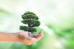 Human hands holding the energy saving lamp of tree Royalty Free Stock Images