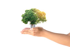 Human hands holding the energy saving lamp of tree Stock Photos