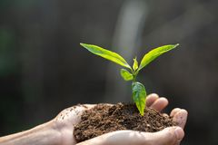 Human hands holding fertile soil and young tree, Planting trees to reduce global warming, environment Earth Day, Forest. Conservation concept stock photos