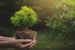Human hands holding green small plant life concept. Ecology conc. Ept Royalty Free Stock Photos