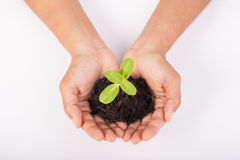 Human hands holding green small plant new life concept. Stock Image