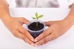 Human hands holding green small plant new life concept. Stock Photos