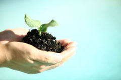 Human hands holding green small plant new life concept. Stock Photo
