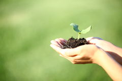 Human hands holding green small plant new life concept. Copy-space Stock Photography