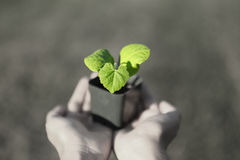 Human hands holding green small plant new life concept. Copy-space Stock Photos
