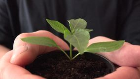 Human Hands Holding Green Small Plant. New Life Concept.. 4K UltraHD, UHD stock footage