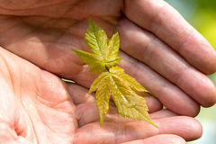 Human hands holding green young plant Stock Photo