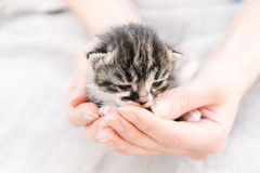 Human hands are holding kitten Royalty Free Stock Images