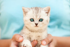 Human hands holding little cat Stock Images