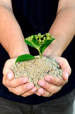 Human hands holding little sprout Stock Photography