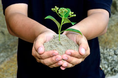 Human hands holding little sprout Stock Images