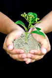 Human hands holding little sprout Royalty Free Stock Images