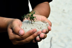 Human hands holding little sprout Stock Photos