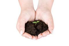 Human hands holding plant Royalty Free Stock Images
