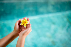 Human hands holding Plumeria flower. Over water Royalty Free Stock Photos