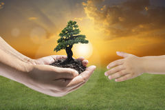 Human hands holding small plant Royalty Free Stock Photography