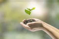 Human hands holding small plant Stock Photo