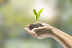 Human hands holding small plant Stock Images