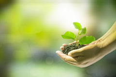 Human hands holding small plant Royalty Free Stock Image