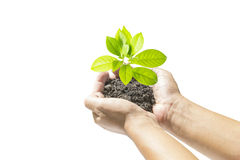 Human hands holding small plant Stock Photos