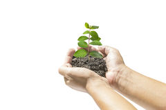 Human hands holding small plant. Over white background. Ecology concept Royalty Free Stock Images