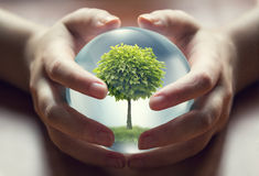 Human hands holding a small tree Stock Photo