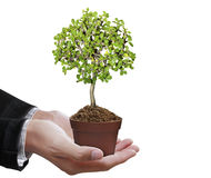 Human hands holding tree Royalty Free Stock Photography