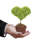 Human hands holding tree Stock Photography
