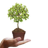 Human hands holding tree Stock Image