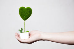 Human hands holding tree in heart-shape in white  backgr Stock Photos