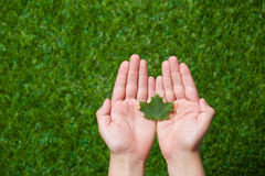Human hands holding tree leaf Royalty Free Stock Photo
